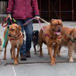 Можно ли заработать на выгуле собак в Москве? 18 полезных советов